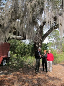 This is likely the Live Oak Muir lay against while recuperating from malaria on Hodgson Hill, Way Key, Cedar Kay, FL